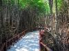 mangroves-near-six-senses-hua-hin