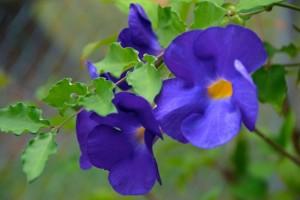 Blue Purple Flowers